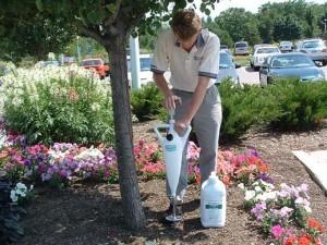 fertilizing a tree
